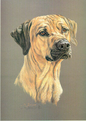 Rhodesian Ridgeback Head Study Limited Edition Art Print by UK Artist Sue Driver