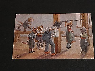 Original Arthur Thiele Signed Cat Postcard - Cats In Gymnasium - T.s.n.