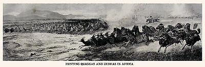 WILD GAME HUNTING VAAL RIVER SOUTH AFRICA, Burchell ZEBRAS, Extinct QUAGGAS 1868