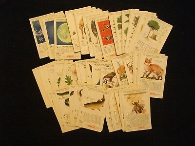 1929-1934 Coca-Cola WORLD OF NATURE cards Series I-VIII G/VG/EX LOT of 76