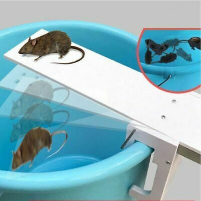 1Pc Walk The Plank Mouse Trap Mice Cage Rat Trap Auto Reset Rodent Bucket Board
