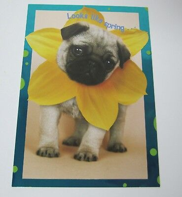Pug Easter Card with Envelope
