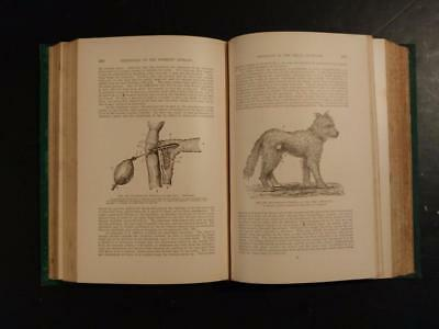 7117----1890 Physiology of the Domestic Animals - R. Meade Smith - First Edition