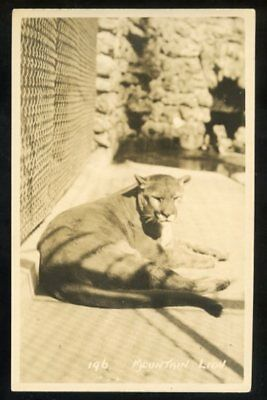 """c.1920 RPPC #196 by Harmon, """"Mountain Lion"""" in a zoo in Western Canada"""
