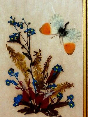 Antique Vintage Floralp Tyrol Austria Hand Made: Real Butterfly, Dried Flowers