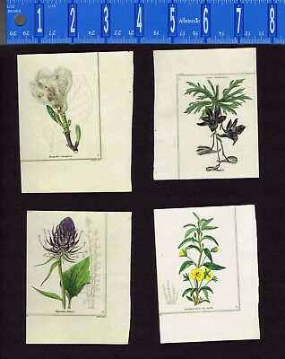 1831 Benjamin Maund Botanical Flowers  (Set of 4) Lot F