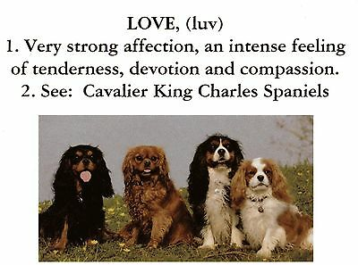 One LOVE, The Meaning Of   Cavalier King Charles Spaniel Note Card
