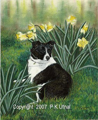 Dog Art Painting&Ink,Border Collie Print,by P K Ufnal