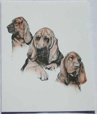 Bloodhound Dog Laura Rogers Pet Notes Notecard Set of 10