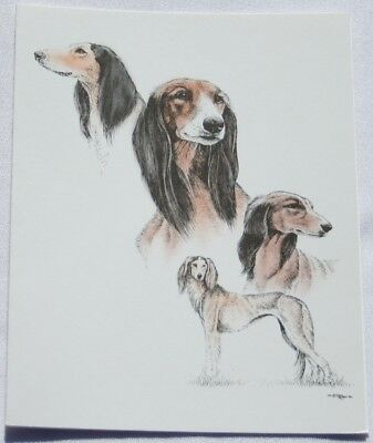 Saluki Dog Laura Rogers Pet Notes Notecard Set of 10