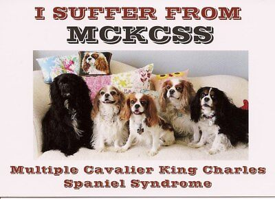 I Suffer From Multiple Cavalier King Charles Spaniel Syndrome blank Note Card
