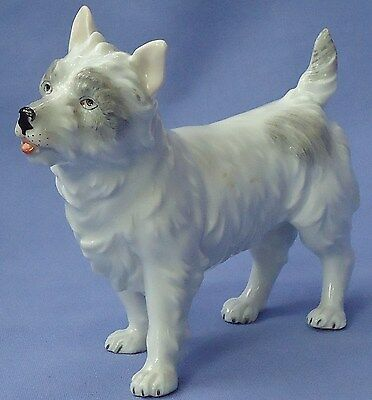 Cairn  West Highland Terrier Dresden Germany 5""