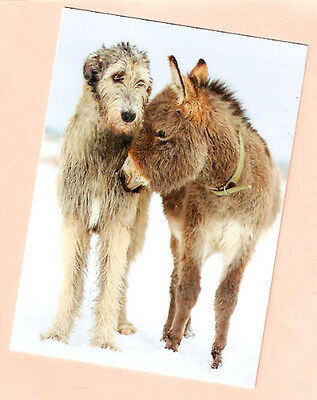Irish Wolfhound and Donkey Burro Christmas Cards Box of 12