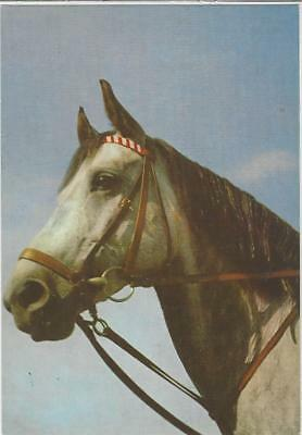 Horse Postcard - COURT-Grey in Drop with Martingale