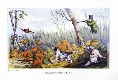 Pheasant Hunting Shooting In Thicket With Dogs Spaniels Vintage Sportsman Hunt