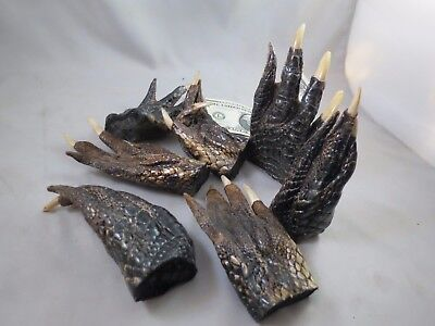 "LOT OF 4 REAL GATOR ALLIGATOR FEET TAXIDERMY claw toes 4-5"" Genuine Authentic"