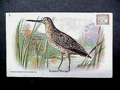 Robin Snipe Collectible Trade Card Cow Brand & Arm & Hammer Advertising 1908