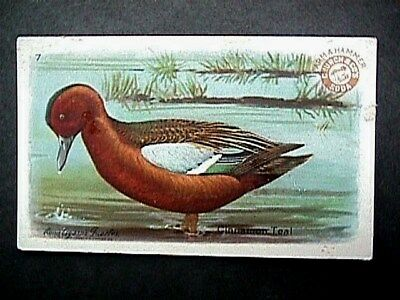 Cinnamon Teal Duck Collectible Trade Card Cow Brand & Arm & Hammer Advertising