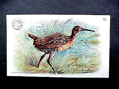 King Rail Collectible Trade Card Cow Brand & Arm & Hammer Advertising 1904