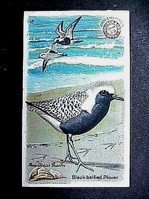 Black Bellied Plover Collectible Trade Card Cow Brand & Arm & Hammer 1924