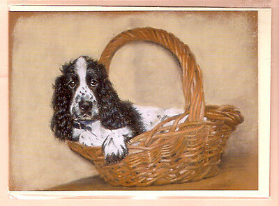 English Cocker Spaniel Notecards: Packed & Ready by Debbie Gillingham  Pack  5