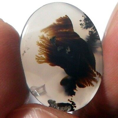 9ct AAA Mesmerising Brown Black DENDRITIC FERN Forest PICTURE AGATE ~Stunning~