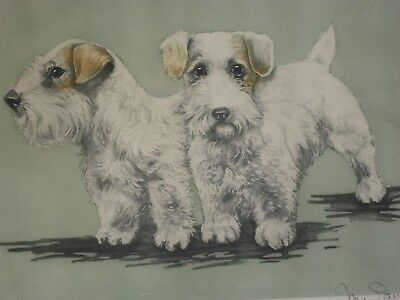 SEALYHAM CESKY terrier etching LE #64/350 pencil signed 15x17""