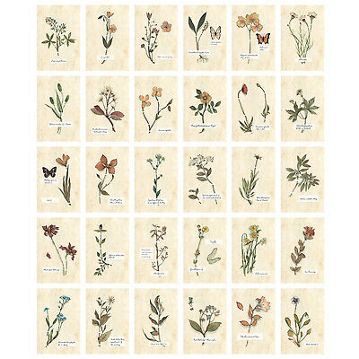 30x Travel Postcard Vintage Flower Butterfly Specimen Picture Poster Post Cards