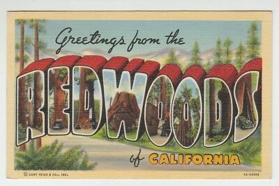 Greetings from california the golden state flag modern large 67274 1945 large letter postcard greetings from the redwoods of california m4hsunfo