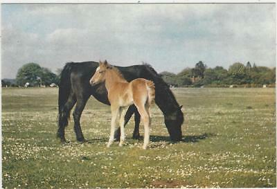 Horse Postcard - DIXON-Early in Collection - New Forest Mare and Foal