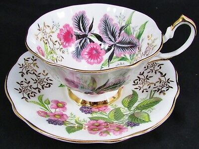 Queen Anne Pink Black Orchids Blackberries Wide Mouth Tea Cup & Saucer