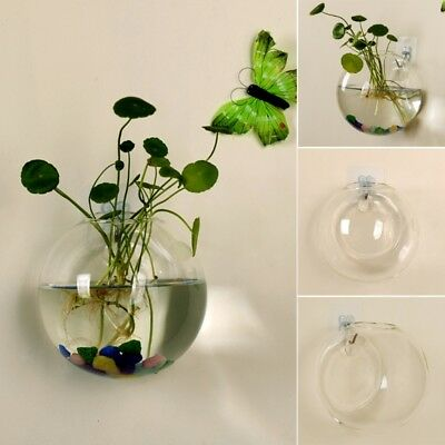 Glass Vase Wall Hanging Hydroponic Terrarium Fish Tanks Potted Flower Plant pot