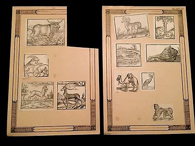LOT OF ANTIQUE BOOK ANIMAL PRINTS 1500s