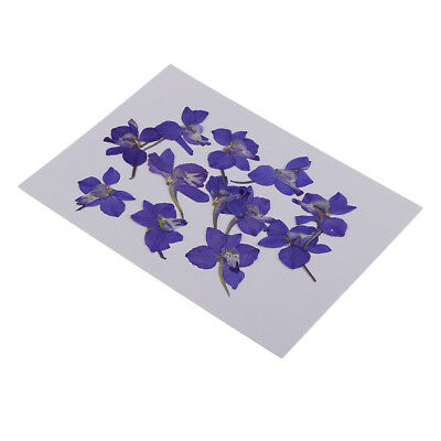 12pcs Pressed Real Dried Flowers Blue Flower for DIY Resin Ornament Making