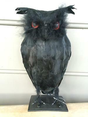 "Realistic Large Black Owl 11"" Real Feathers Halloween Decoration Prop NEW"
