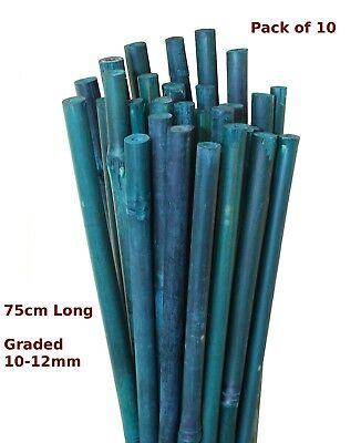 75cm Green Bamboo Canes Garden Stake Flower Spike 10-12mm Pack of 10
