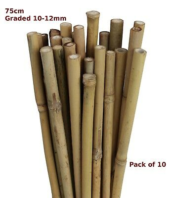 75cm Natural Bamboo Canes Garden Stake Flower Spike 10-12mm Pack of 10