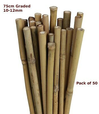 75cm Natural Bamboo Canes Garden Stake Flower Spike 10-12mm Pack of 50