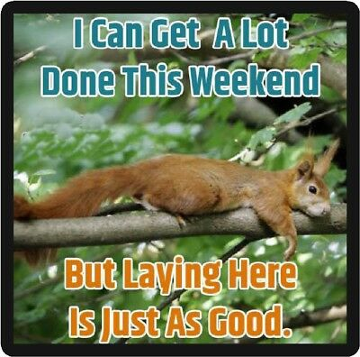 Funny Squirrel Humor I Can Get A Lot Done Refrigerator Magnet
