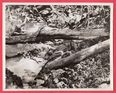 1942 Tide Washed Japanese Body Ashore Guadalcanal 7x9 Original News Photo