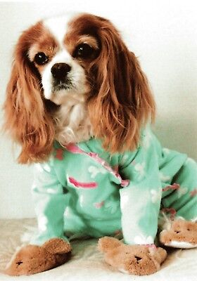 Morning Sunshine or Get Well  Cavalier King Charles Spaniel One blank Note Card