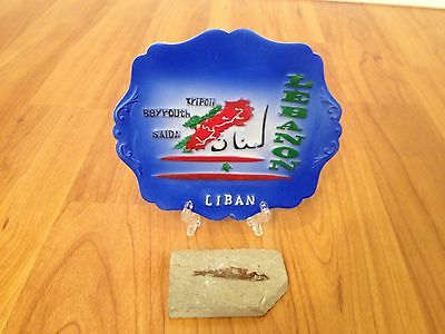 Prehistoric Cretaceous Period Lebanese Fossilized Fish Fossil Plaque