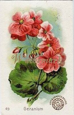 Antique Vintage Trading Card Fabric Quilt Block Geranium Floral AM49