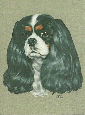 James, a Tricolor Cavalier King Charles Spaniel blank note card sale