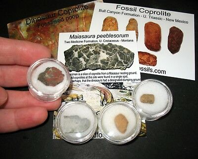 Jurassic Triassic Cretaceous dinosaur fossil coprolite poop collection 4 types