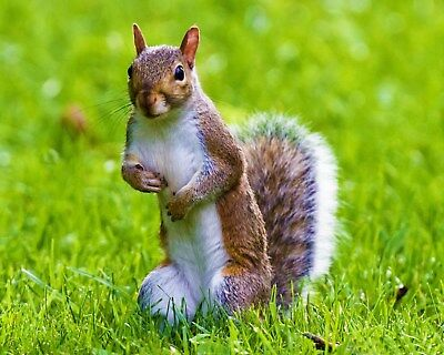 Squirrel / Squirrels 8 x 10 / 8x10 GLOSSY Photo Picture IMAGE #26