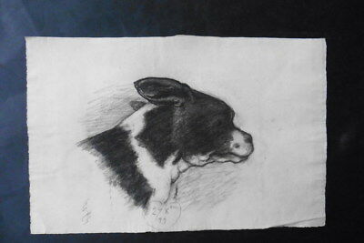 French School 1899 - Portrait Of A Dog - Charcoal Drawing