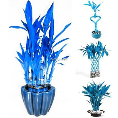 100Pcs Garden Indoor Bonsai Decorative Exotic Style Blue Bamboo Seeds N4U8