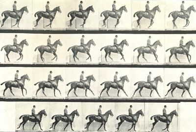 HORSES. The Canter 1912 old antique vintage print picture