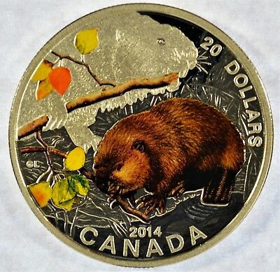 2014 Canada $20 Silver Proof Painted Baby Animals Beaver Coin (c2.50)